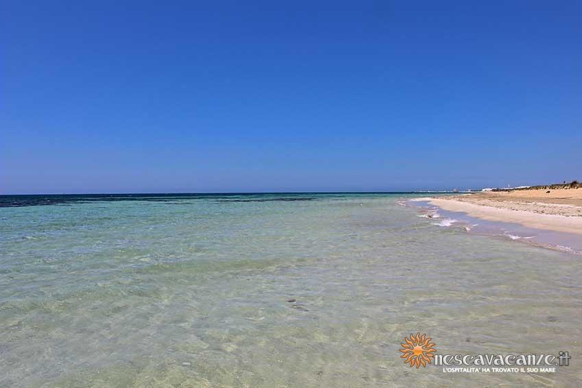 spiaggia di pescoluse foto 10