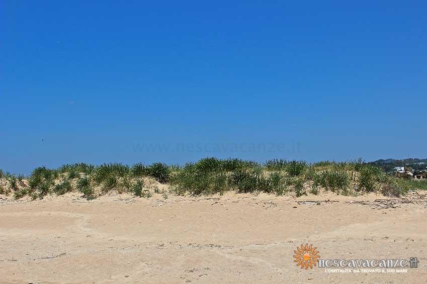 spiaggia di pescoluse foto 9