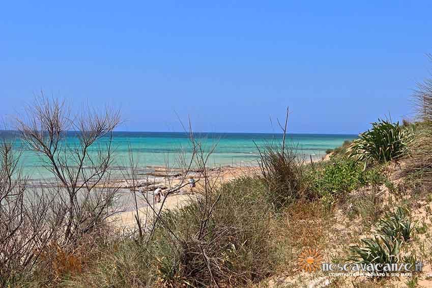 spiaggia di pescoluse foto 7