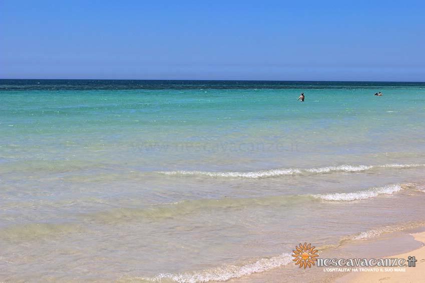 spiaggia di pescoluse foto 16