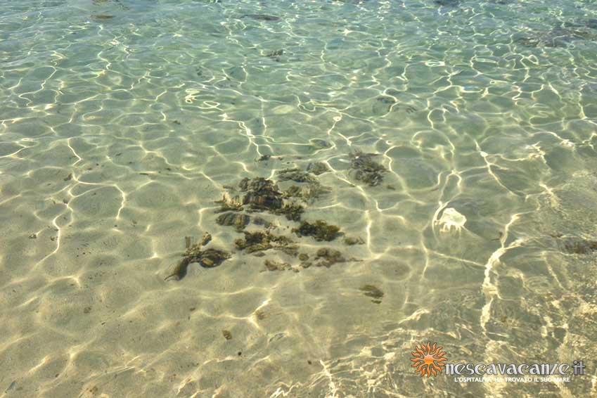 mare e spiaggia di Pescoluse