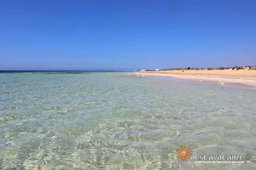 spiaggia di Pescoluse foto 14